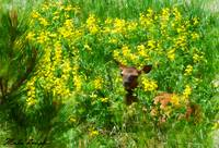 Wapiti and Flowers