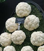 Display of cauliflower beauty