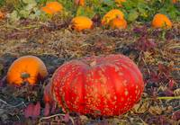 fire red pumpkin in between orange smaller pumpkin