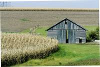 Midwestern Barn and Cornfield