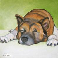 dogs - akita - ben by tracie brown
