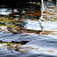 Water reflection 2 by Connie Yost