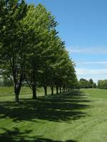 Trees on the 14th Fairway.