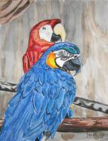 Macaw parrots bird art