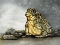 Mr. Woodhouse Toad