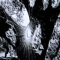 Spirit Tree by Gary Miles