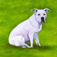 dogs - pit bull - valentine by tracie brown