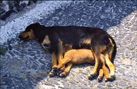 Let Sleeping Dogs Lie