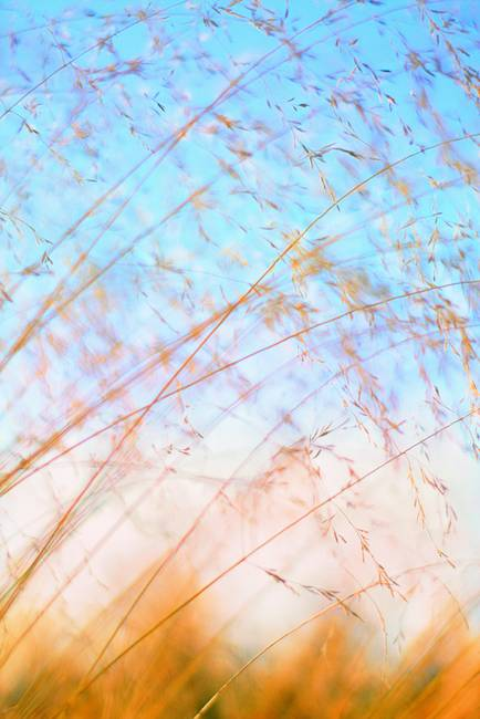 Grass Abstract by Paul Hood