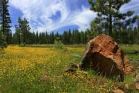 Springtime In Lassen County