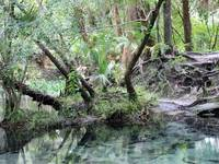 Lovely Lithia Springs by Carol Groenen
