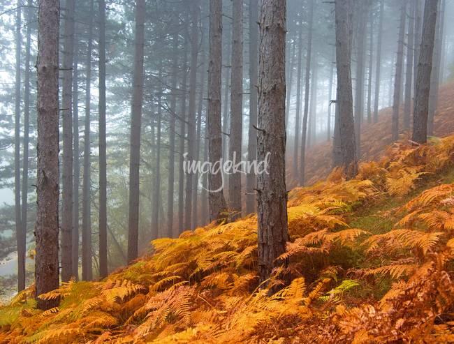 traditional forest photography for sale on fine art prints. Black Bedroom Furniture Sets. Home Design Ideas