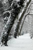 Summerhouse Hill Wood under snow