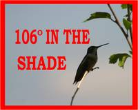 106 IN THE SHADE