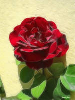 Enhanced Red Rose