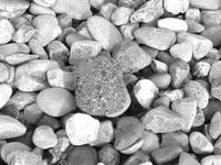 Pebbles on a Beach, Kicked Around Displaced by Fee