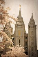 Salt lake temple with blossoming trees 2 texture