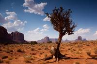 tree growing up in monument valley, arizona