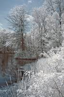 Country Lake in Infrared