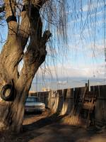 Tire and Tree