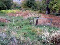 Vegetation & Fence