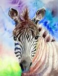 Zebra of Color