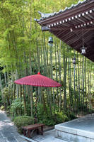 Red Umbrella in Bamboo Forest