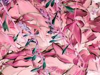 Hosta in Shades of Pink