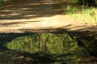 Reflections in a Puddle 3178