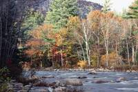 Scenic Fall Foliage at The Swift River