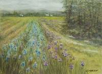 Iris Fields fine art painting