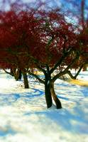 red tree-snow-blur