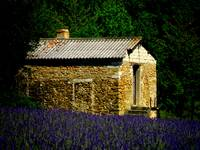 Stone Shed in Lavender Field
