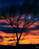 Tree in Sunset #1