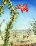 Desert Ocotillo Flowers and Bighorn Sheep
