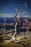 Death on the Rim - Grand Canyon National Park, Ari