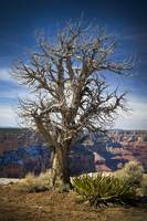 Strength in Weakness - Grand Canyon National Park,