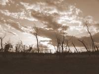 Cloudy Day - Sepia
