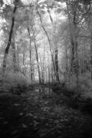 Infrared Forest Creek