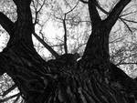 Tree - Black & White