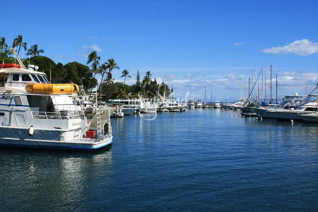 Lahaina Harbour West Maui Hawaii