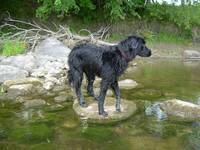Dog on a Rock 687
