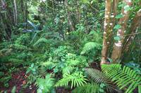 Tropical Rainforest - Puerto Rico