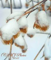 SNOW COVERD BURRS,,PRETTY!!