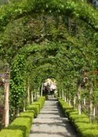 Garden Arbor Tunnel by Carol Groenen