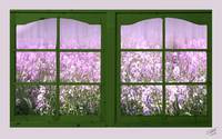 Flower Window