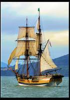 Lady Washington Tall Ship. San Francisco Bay