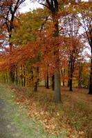 Autumn in Pittsburgh: Roadside