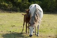 Mother Watches Over Foal