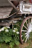Wagon Wheel Flowers